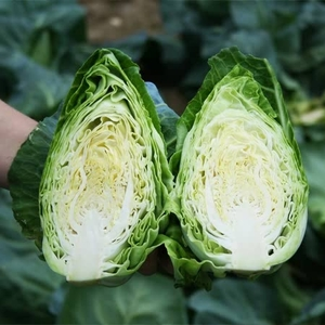 Plants & Plant Care  - Cabbage Seeds - Excel F1 Hybrid