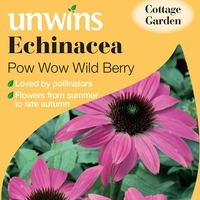 Plant Seeds  - Echinacea Seeds - Pow Wow Wild Berry