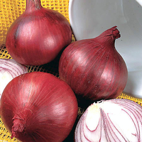 Vegetable Seeds  - Onion Seeds - Red Baron