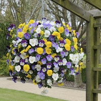 Pansy Plentifall Mix - Seeds