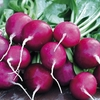 Radish Purple Plum -seeds