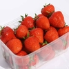 Strawberry Misted Tips Christine-plants