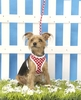 Leads & Harnesses Dotty Softy Harness & Lead XL Size