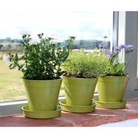 5 Bamboo Pot and Saucer - Sage Green (5 Pack)