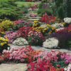 Complete Garden Bedding Plants - LUCKY DIP