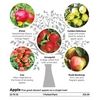 Family Fruit Tree - Apple
