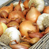 Garlic,  Onion & Shallot Collection