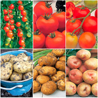 Grafted Tomato Plants & Potato Collection