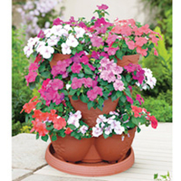 Flower Pots & Stands  - Impatiens Flower Planter & Plants - SPECIAL OFFER