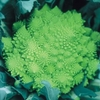 Our Selection Brassica Veg Plants