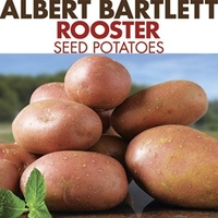 Seed Potatoes - Rooster 1kg