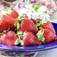 Strawberry Plants - Korona