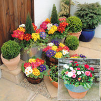 Flower Pots & Stands  - Value Plant Autumn Collection - LUCKY DIP