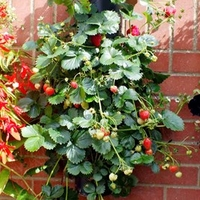 Garden Plants & Bushes  - Wall Mounted Flower Tower