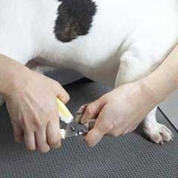 Cleanliness & Hygiene  - Nail Clipper