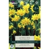 Autumn Bulbs - Narcissus Tete-a-tete 12 Bulbs