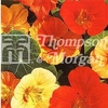 Flower Seeds - Nasturtium Tom Thumb Mixed