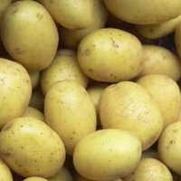Seeds & Bulbs  - Organic First Early Special Taster Pack Seed Potato - Maris Bard