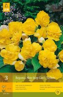 Plants & Plant Care  - Begonia