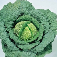 Garden Plants & Bushes  - Cabbage (Savoy) Seeds - Ormskirk (1) Rearguard