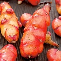 Garden Plants & Bushes  - Oca Giggles Gourmet Roots