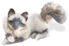 Soft Toys Steiff Minka Sacred Birman Cat Masterpiece