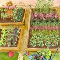 Plants & Plant Care  - Allotment Constant Garden