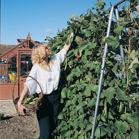 Other Garden Equipment & Decoration  - Runner Bean Frames
