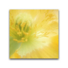 Canvas Print Yellow Flower Canvas Print - Square