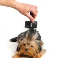 Animal Care  - Dog Grooming Professional