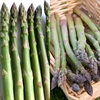 Asparagus Collection (24 crowns)