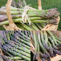 Vegetables  - Asparagus Collection (36 crowns)