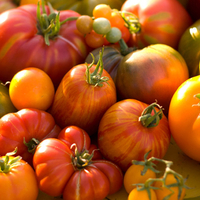 Vegetable Seeds  - Colourful Tomato Collection (12 plants)