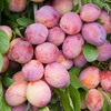 Fruit Trees & Bushes Cordon Plum 'Victoria'
