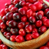 Fruit Trees & Bushes Cranberry Bush 'Earliblack' (3 plants)