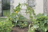 Square Ornamental Plant Frame