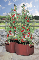 Flower Pots & Stands  - Tomato Three Cane Support Planter (pack of 2)