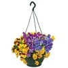 Plants & Seeds Pansy Cascadia XL Trailing (Autumn) 2 Hanging Baskets