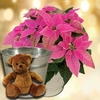 Christmas Gifts Princettia Plant with Metal Planter + Cuddly Bear