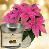 Christmas Gifts Princettia Plant with Metal Planter + Jersey Fudge