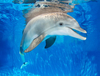Theme Parks Winter The Dolphin and Clearwater Beach