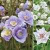 Plants & Seeds Double Flowered Hardy Geranium Collection