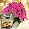 Christmas Gifts Princettia Plant with Metal Planter + Jersey Shortbread