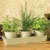 Plants & Seeds Windowsill Herbs with pots and tray