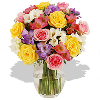 Flowers  - Rose and Freesia - flowers