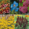 Medium Perennial Mix - 5 varieties - 1 packet of each (222 seeds in total)
