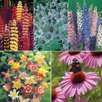 Plants & Seeds  - Tall Perennial Mix - 5 varieties - 1 packet of each (345 perennial seeds in total)