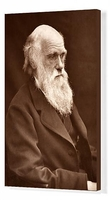 Art  - 1874 Charles Darwin picture by Leonard. Canvas Print