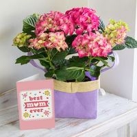 Flowers  - Hydrangea Gift Bag Flowers