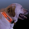 Pets Nite Dawg LED Dog Collar - Red - M